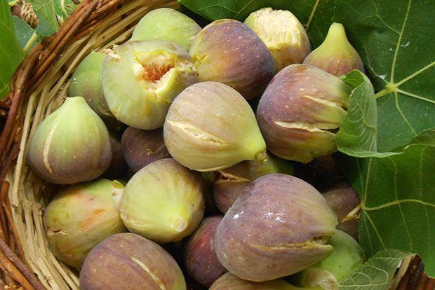 Τα σύκα του Μάη αλλά και του Ιούνη και πως να τα έχετε στον κήπο σας   e-mesara